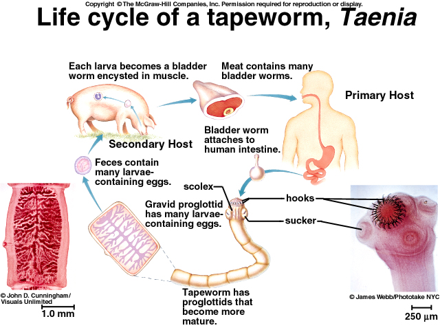 Biology 10 Topic 10c Worms